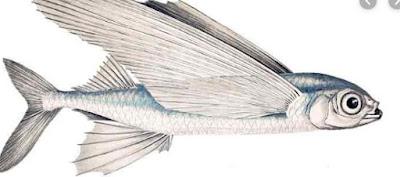 ikan indosiar