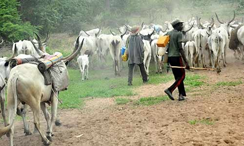 Buhari Directs Agric Ministers To Map Out Grazing Routes