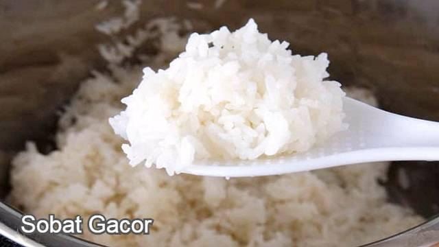 Manfaat Nasi Putih Bagi Ayam Bangkok Aduan Andalan