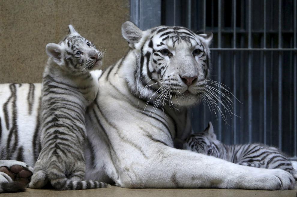 Животные в фотографиях (11 фото)