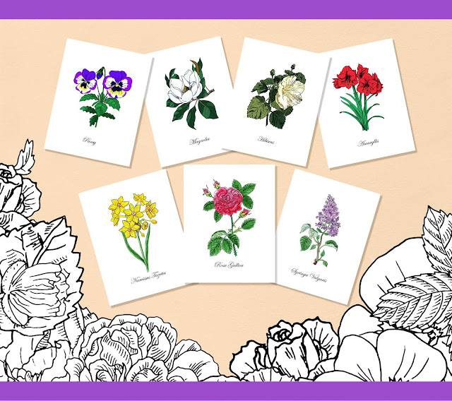 Photos of colored flowers from coloring book Botanical names