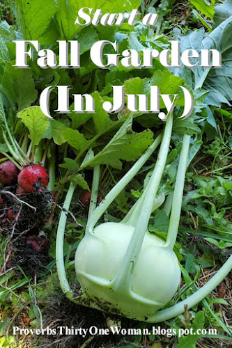 How to Start a Fall Garden (In July)