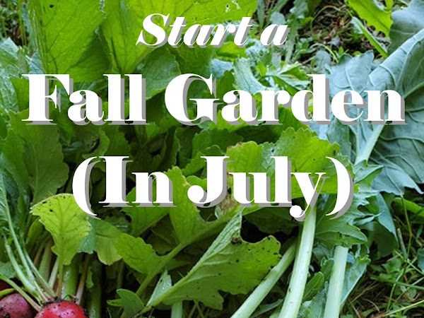 How to Start a Fall Garden - in July
