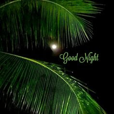 Top good night image hd Free download wallpaper  of good night pictures HD pics foWhatsapppp
