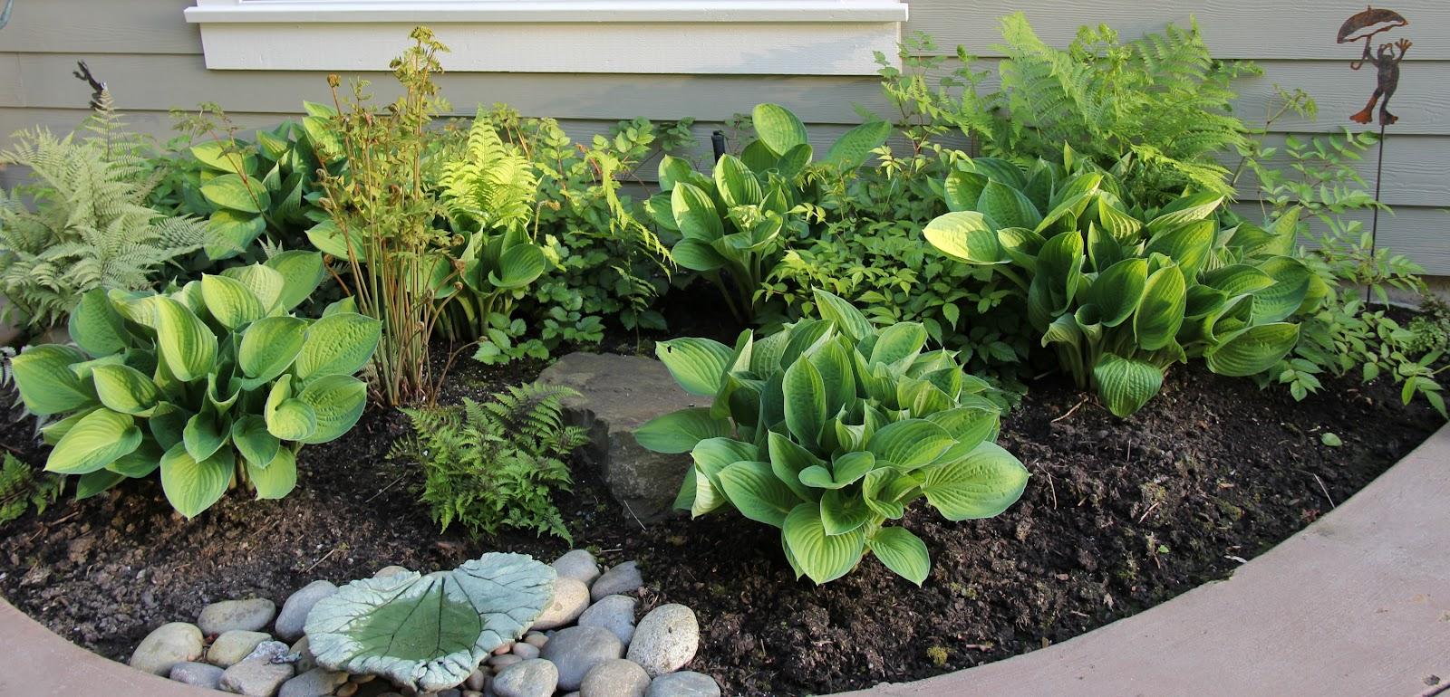 Debbie Angel's Garden Ferns Astilbe And Hosta In Shade Garden