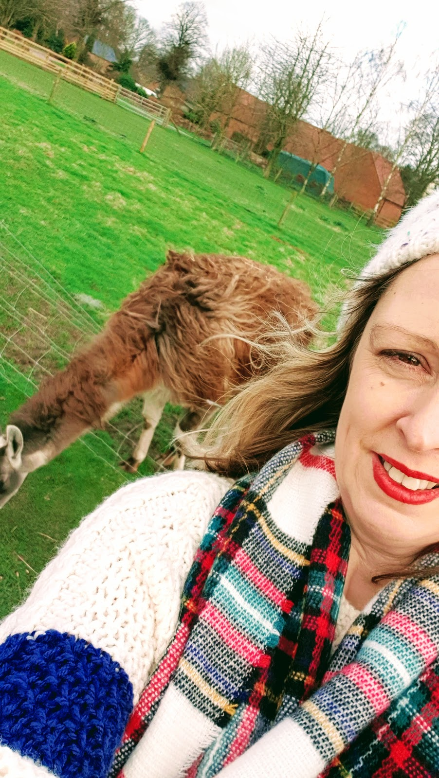 Selfie with a Brown llama