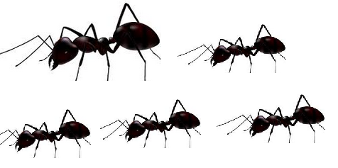 Identifying ants How to get rid of ants naturally from your house