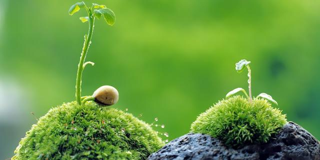 Plantas y biologia