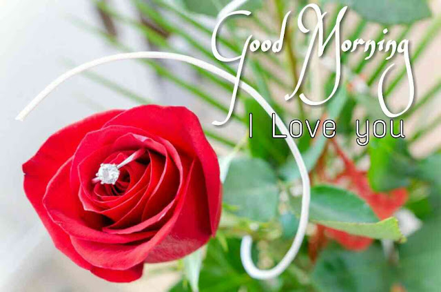 , Good morning love rose images