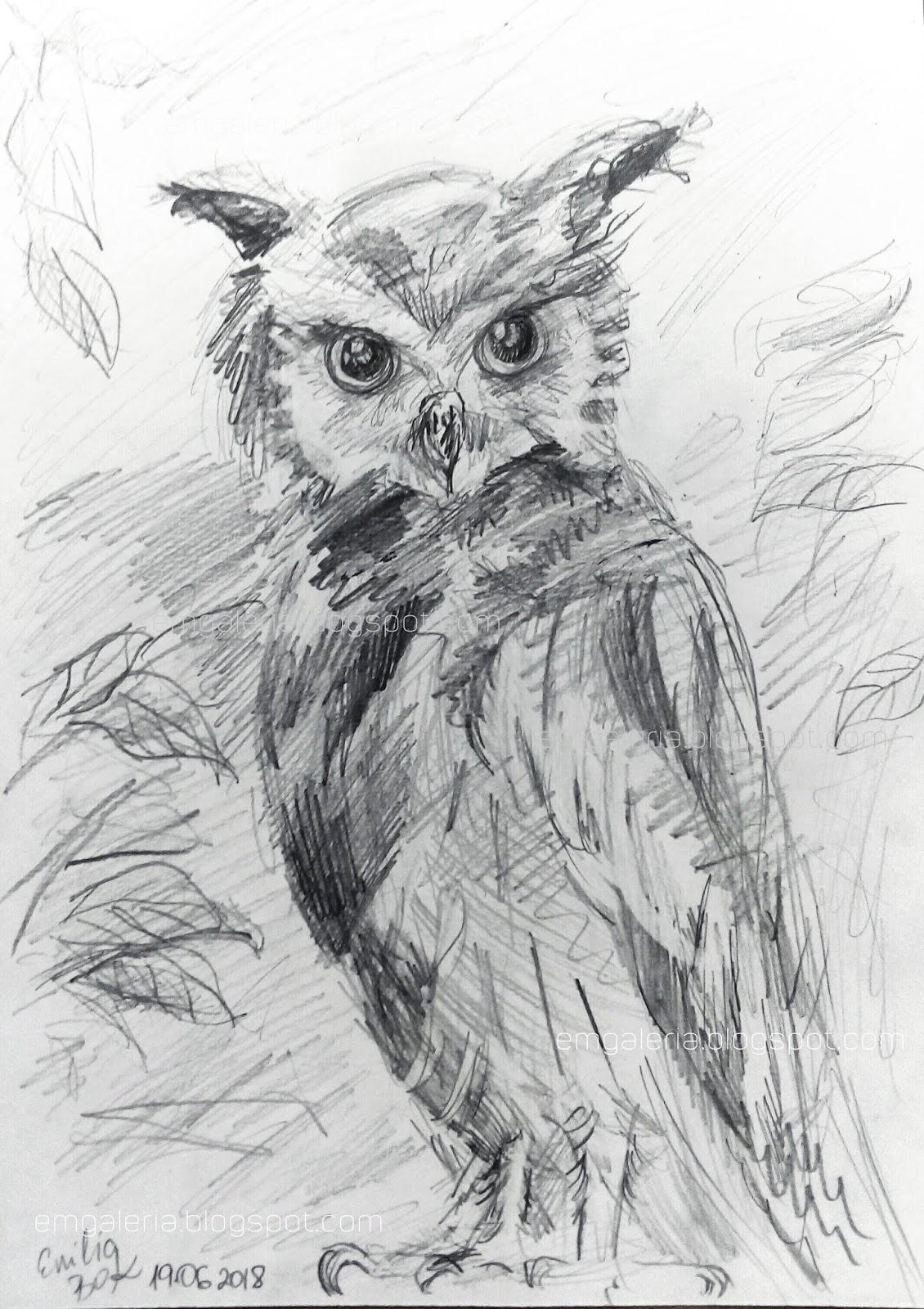 Rysunek Obraz Sowa Rysunek Olowkiem