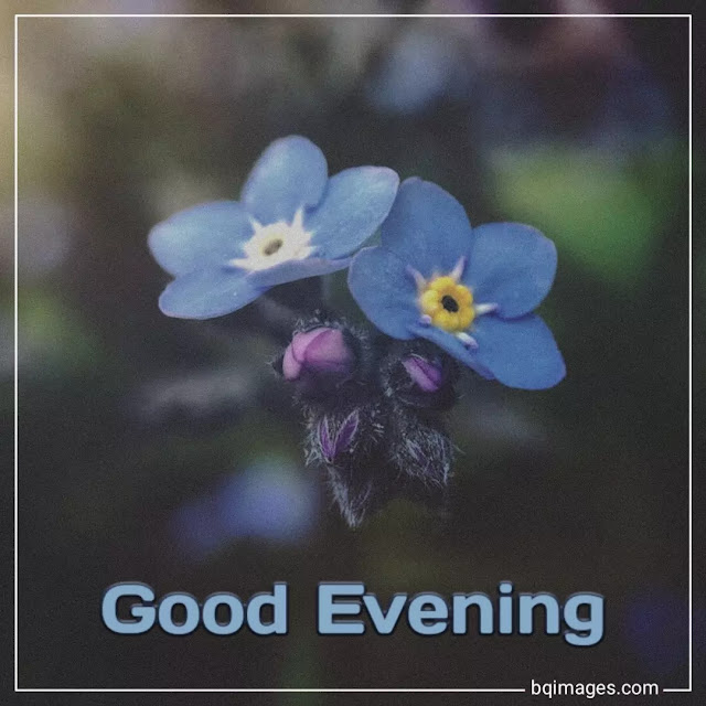 good evening flowers images for whatsapp
