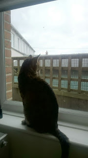 Cat looking out a window.