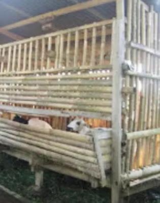 Contoh Gambar Tempat Pakan Kambing Domba dari Bambu
