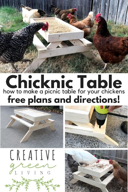 How to make a DIY chicken sized picnic table - AKA a Chicknic table (or chic nic table)! This is an adorable project to make a custom feeder for your backyard chickens that keeps their food up off the ground. It's one of those fun ideas that doubles as decor for your chicken run and keeps your chickens from getting bored. #ChickenKeeping #backyardchickens #chickenDIY