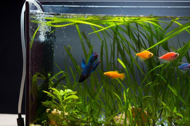 Aquarium Aeration – Fish Survival Depends on It