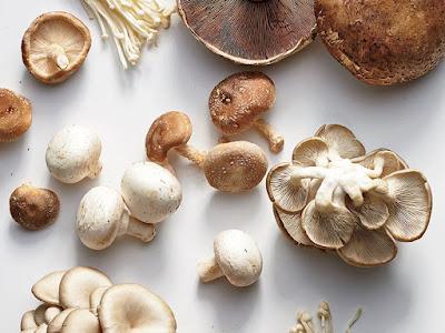 Scope of Mushroom Business in Odisha