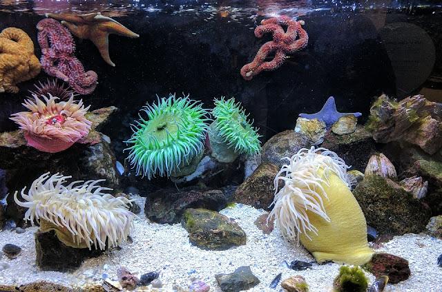 Cara Merawat Anemon Laut