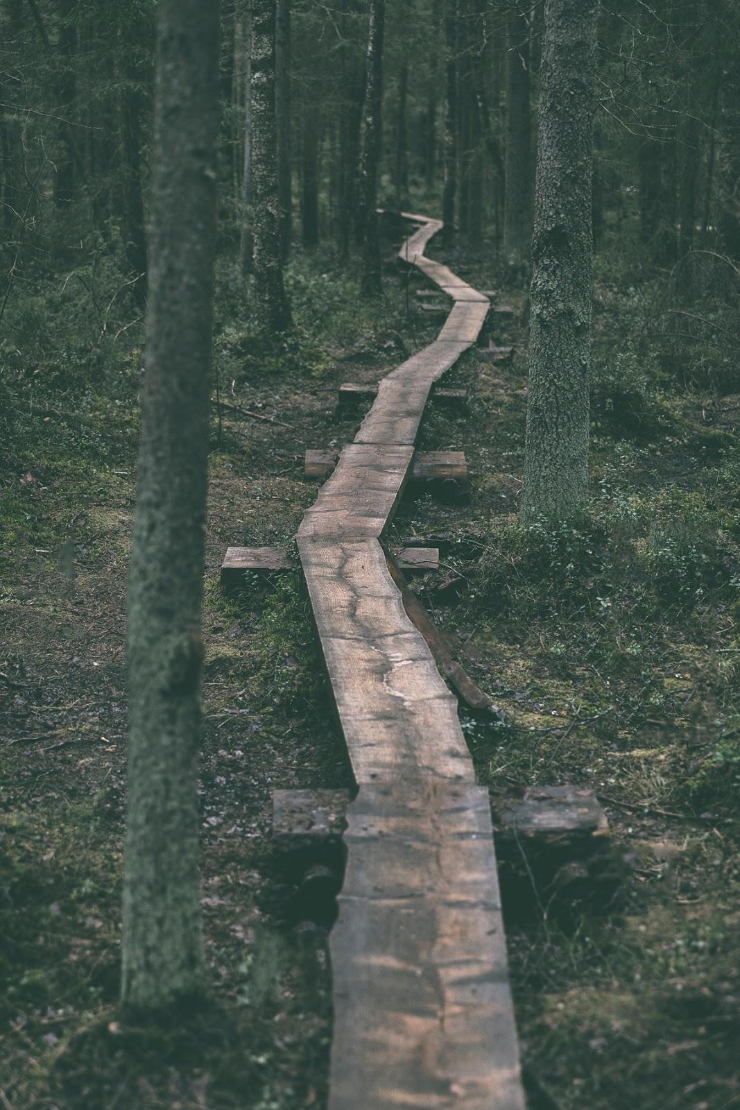 Hyvinkää, Terveysmetsä, luonto, luontopolku, nature, woods, metsä, metsäreitti, naturephotography, polku, valokuvaus, valokuvaaminen, Frida Steiner, Visualaddict, visualaddictfrida, luontovalokuvaus, this is Finland, Suomi, visit finland, pitkospuut, path