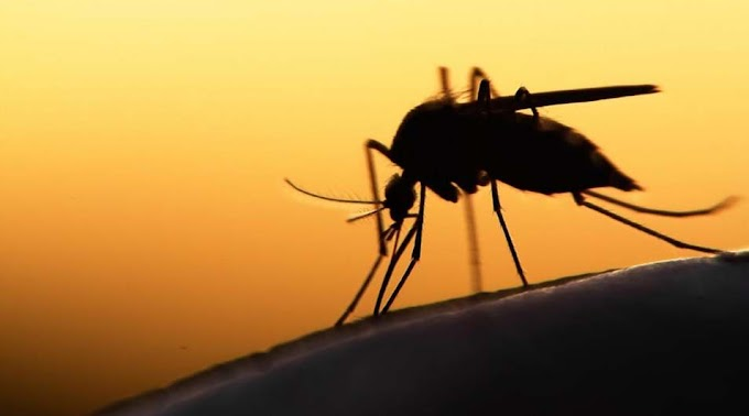 A vihar miatt elmaradt szúnyogirtást pótolnák Szolnokon