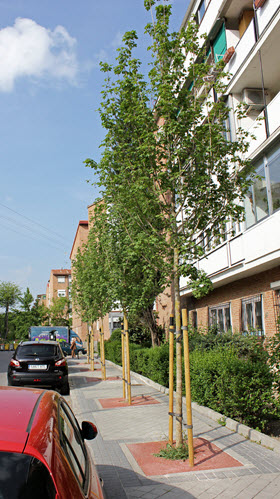 Plantación de 15.524 árboles en zonas verdes, alcorques y parques entre 2019 y 2020