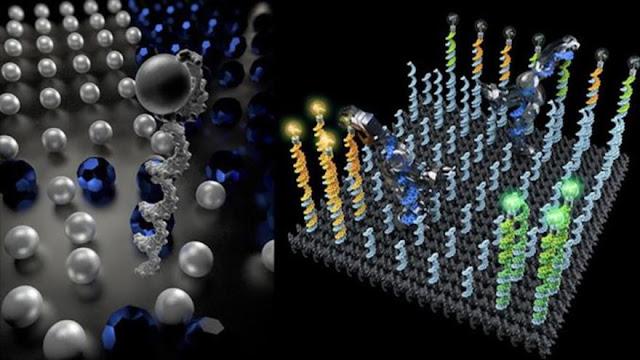 "Crean en EEUU robot de ADN que ordena moléculas ""pasito a pasito"""