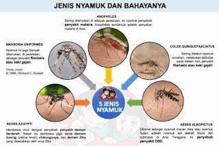 Gambar Jenis nyamuk dan bahayanya www.simplenews.me