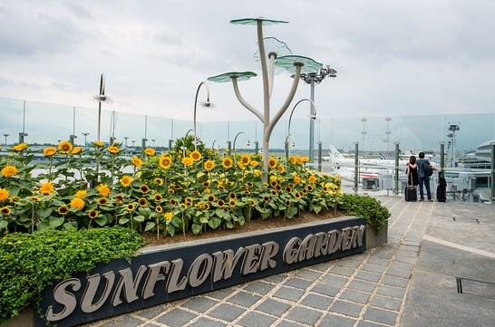 Sun Flower Garden Medan, Tempat Wisata di Sumatera Utara Yang Belum Banyak Diketahui, Tempat Wisata di Medan Yang Gratis, Tempat Wisata Ala Jepang di Medan, wisata medan