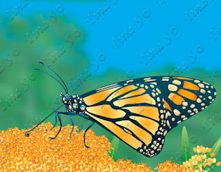 /monarch-butterfly-2-extra-80553421.html