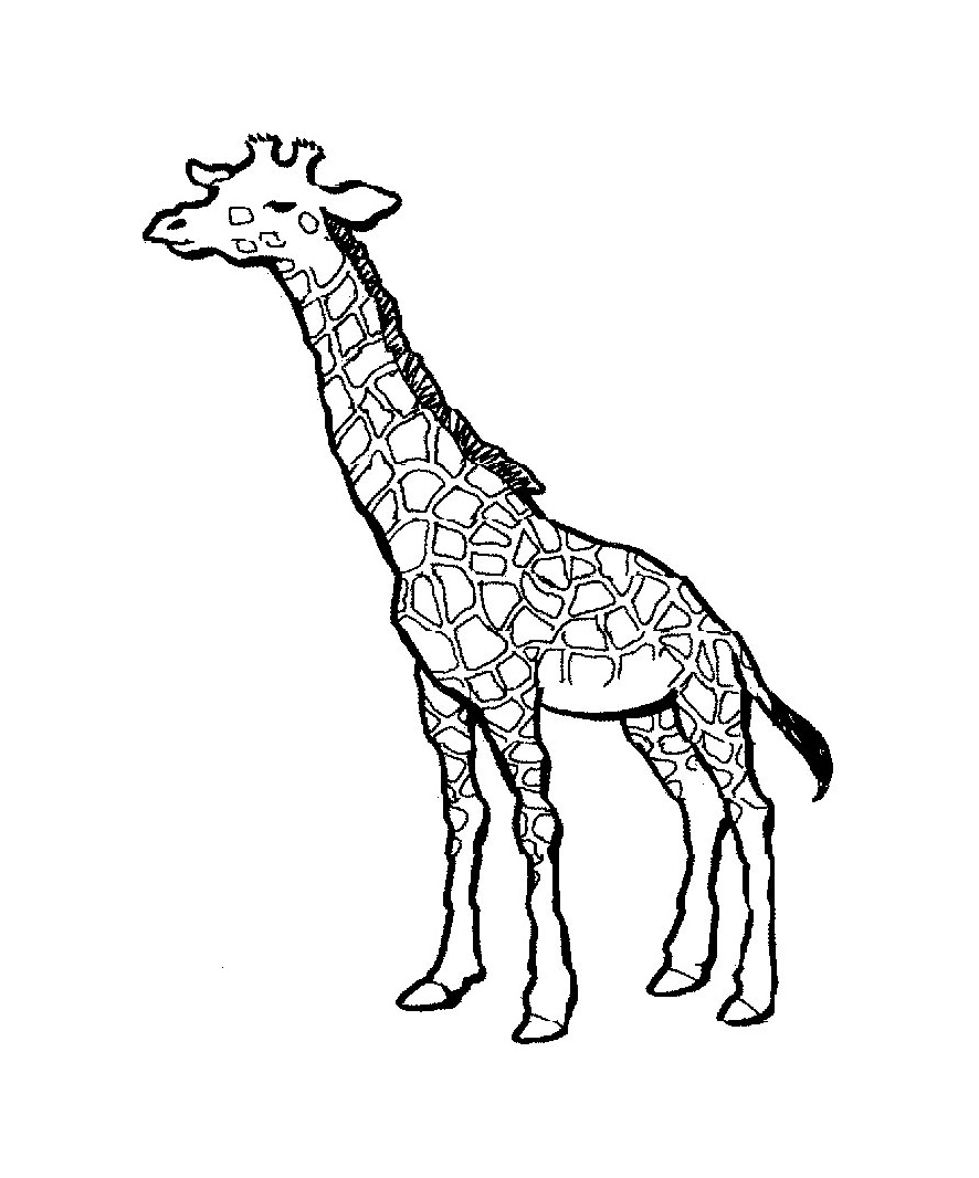 real giraffe coloring pages - photo#19