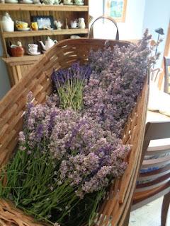Fresh cut lavender in baskets.