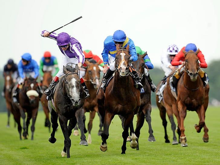 sistem perdagangan balap kuda terbaik