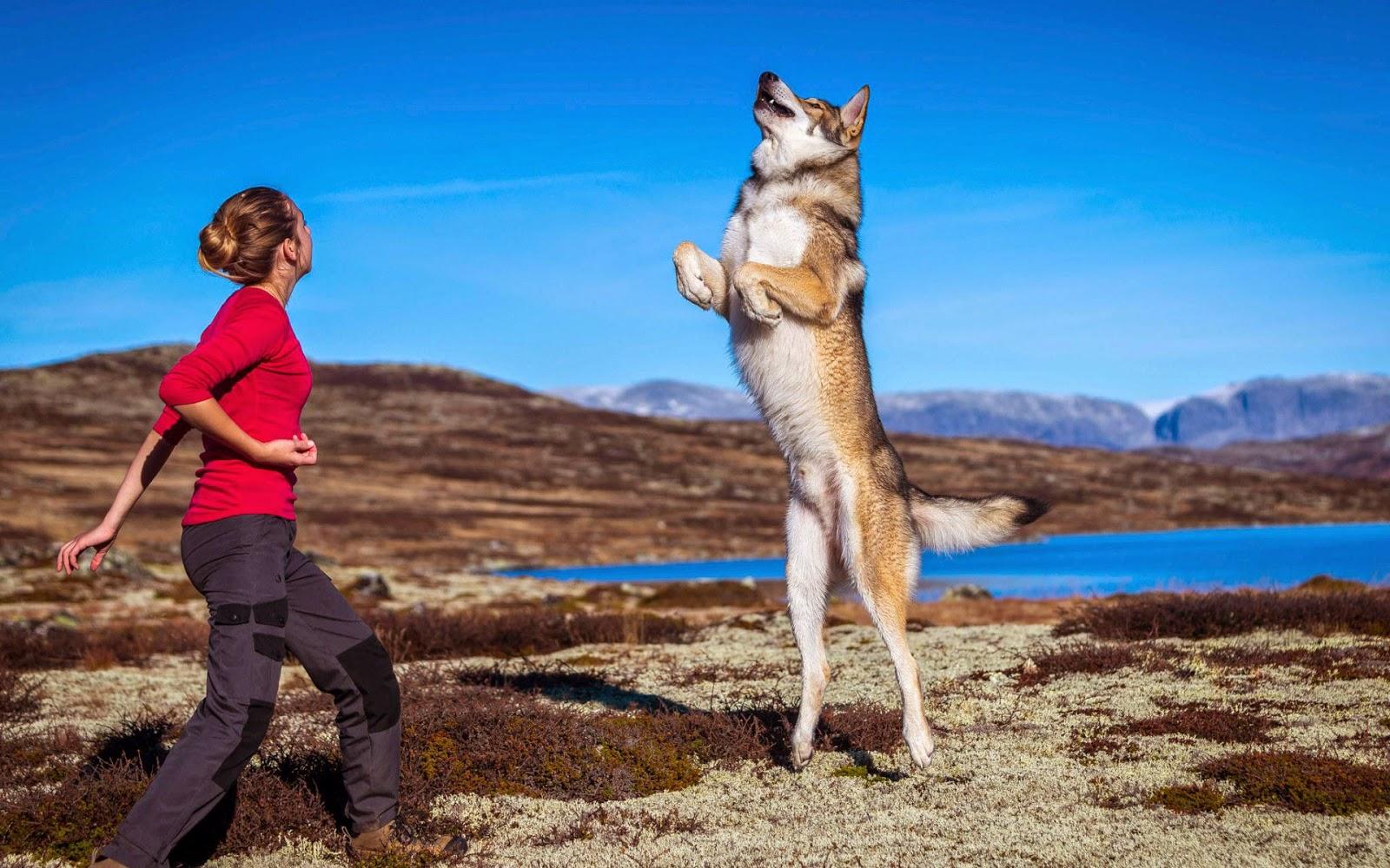 Vrouw leert hond kunstje rechtopstaan