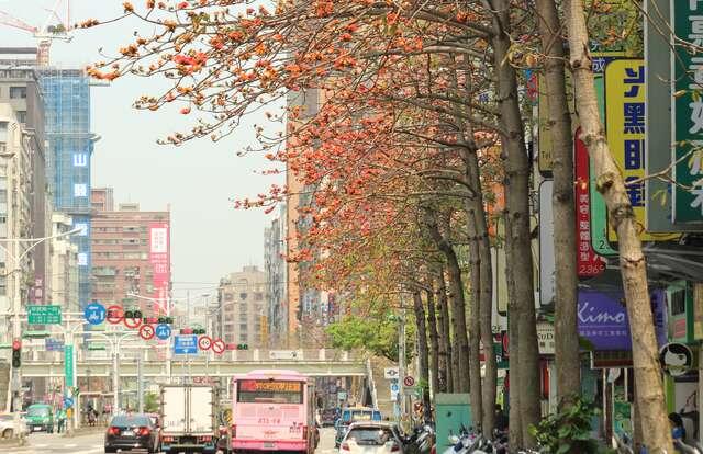 台灣北部木棉景點 台北羅斯福路木棉花道