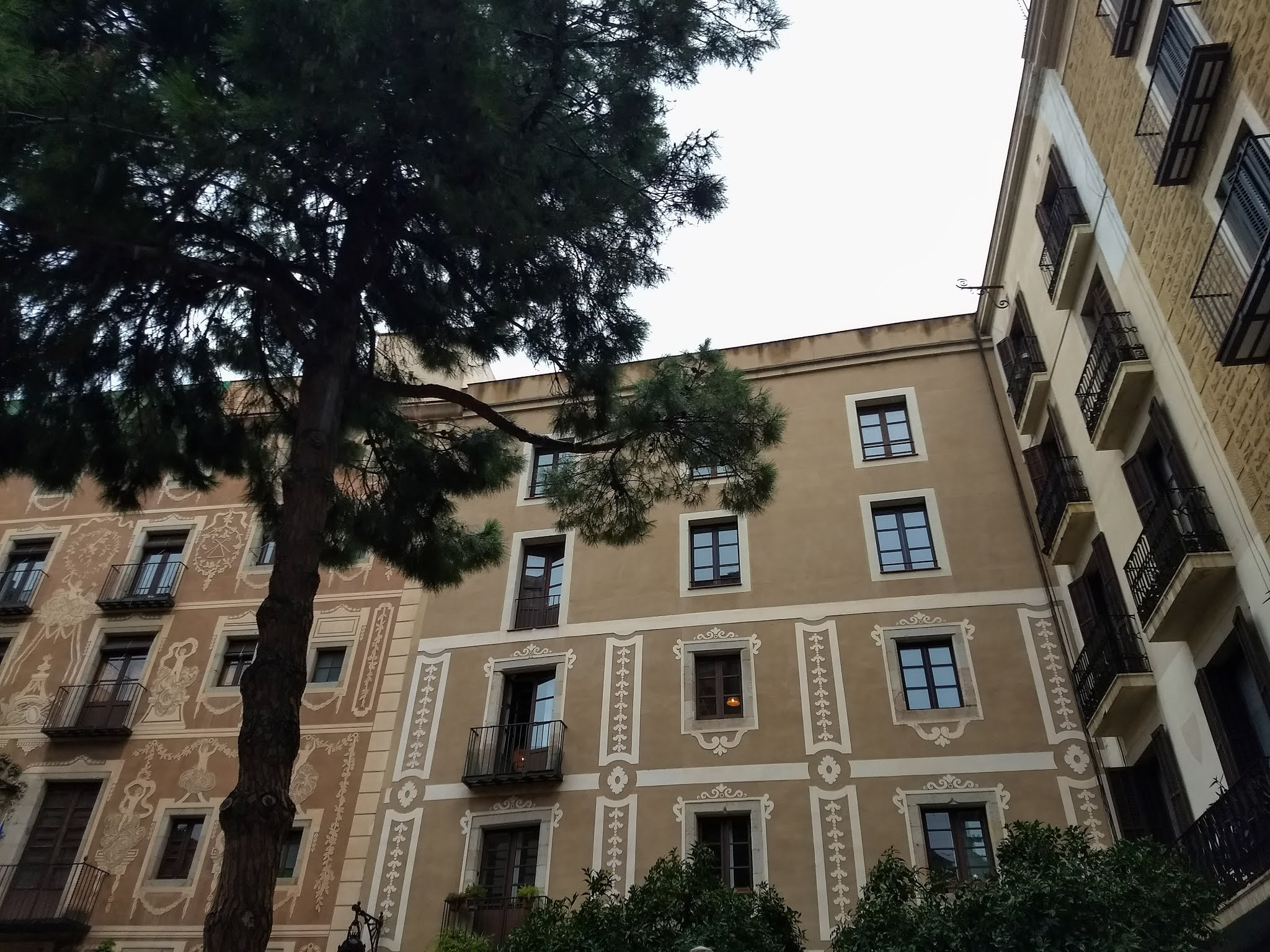 Looking up at a pine tree and building facade on Plaza del Pino.