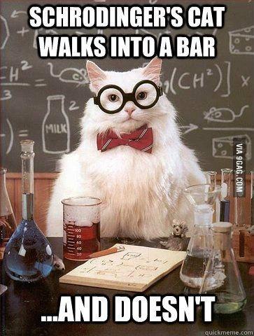 Funny teacher cat - Follow me