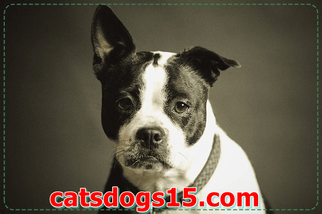 Slideshow: The Best Dog Breed for Your Health and Personality