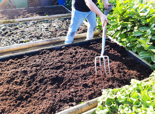 Image shows my husband spreading out compost in a raised vegetable bed