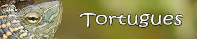 http://www.unzooencasa.com/p/tortugues.html