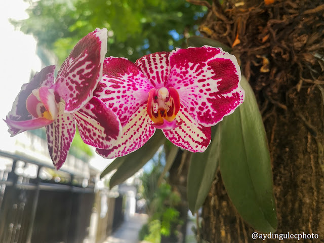 Orchids on Trees VI