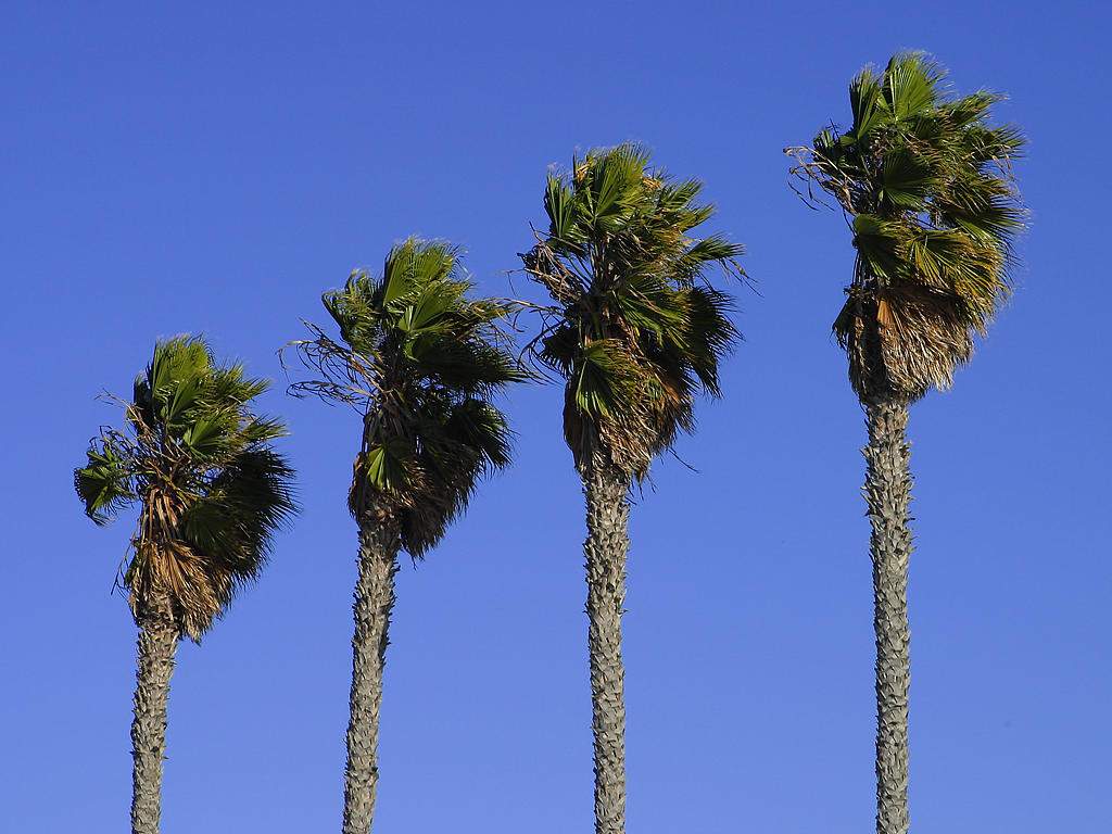 Cute Hawii Wallpapers Palm Tree Pictures Hits All