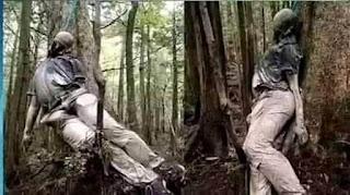 """আত্মহত্যার জন্য কেন জাপানের মানুষ  """"সি_অফ_ট্রি""""এই জায়গাটি বেছে নেয় জানেন?"""