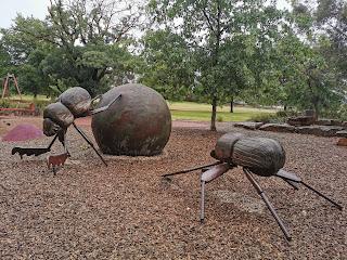 BIG Dung Beetles at McKenzie Reserve in Yarra Gen
