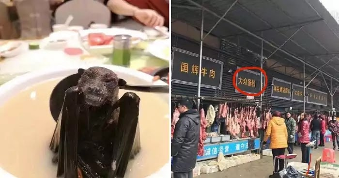 Chinese Market In Wuhan, Where Coronavirus Started, Sells The Meat Of Over 100 Animals, Including Live Koalas, Snakes, And Wolf Puppies
