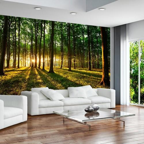metsä tapetti Metsä Taustakuva valokuvatapetti Metsä taustakuva auringonlaskun puunrungot Fund taustakuva valokuvatapetti luonto tapetti metsä
