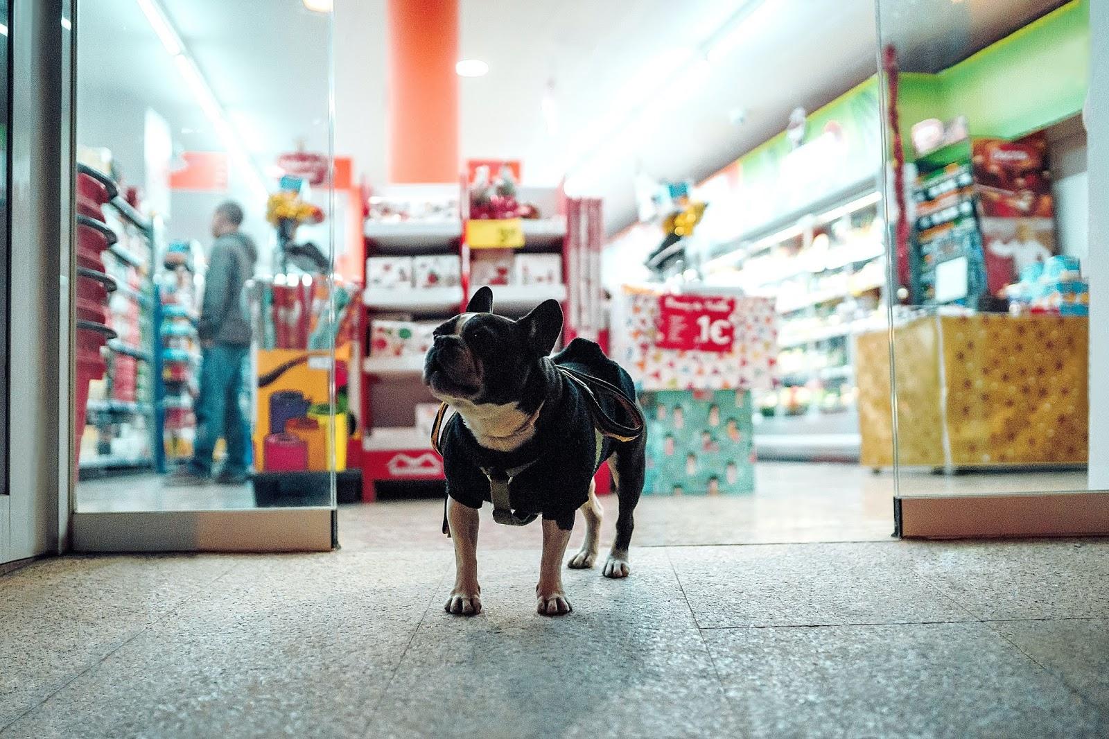 Γιατί δεν πρέπει να αφήνετε τον σκύλο δεμένο έξω από το σούπερ μάρκετ