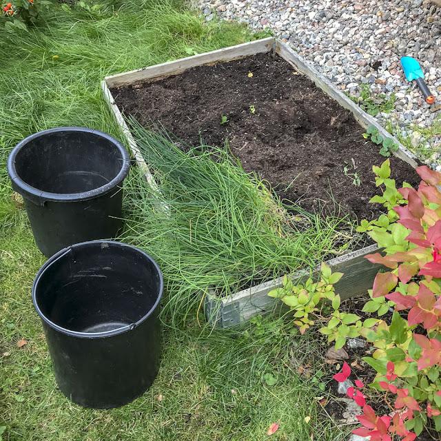 odlingsbox, gräslök