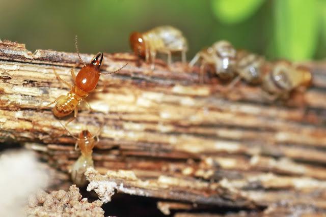 prevención plagas madera