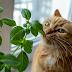Zielnik przyjazny kotom
