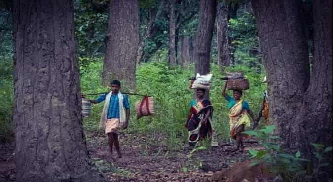 Forest in Bihar