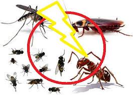 Phun muỗi tại huyện Ứng Hòa